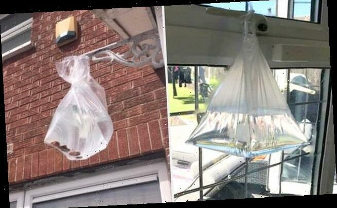 Mum reveals how to banish stubborn flies during summer
