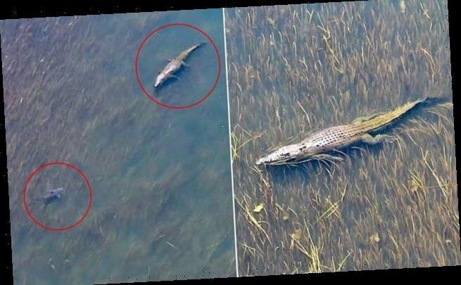 Footage captures moment a giant crocodile and shark go head-to-head