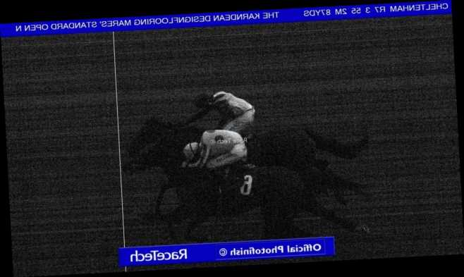 Punters left in the dark as final Cheltenham race deemed dead-heat despite photo finish suggesting otherwise