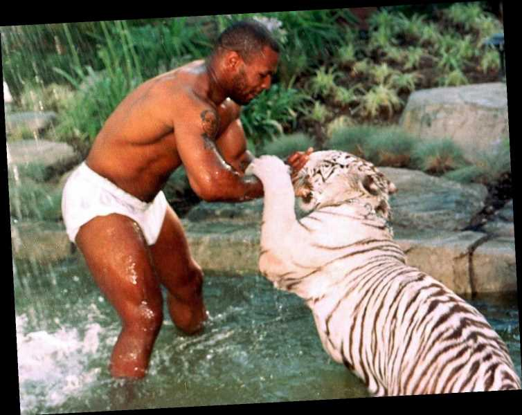 Mike Tyson says becoming real life 'Tiger King' brought him regret and reveals owning THREE white tigers was a mistake – The Sun