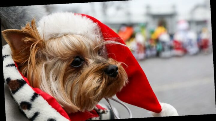 Raise the Woof! The 'First-Ever' Christmas Song Made for Dogs to Enjoy Is Out Now