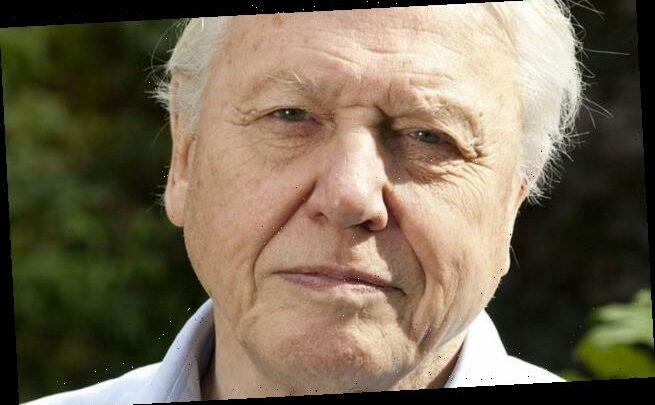 David Attenborough is voted the UK's top voice