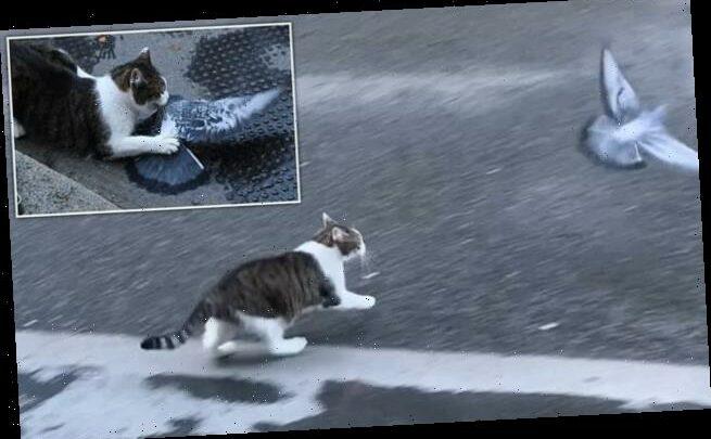 Larry the cat makes latest No 10 bungle