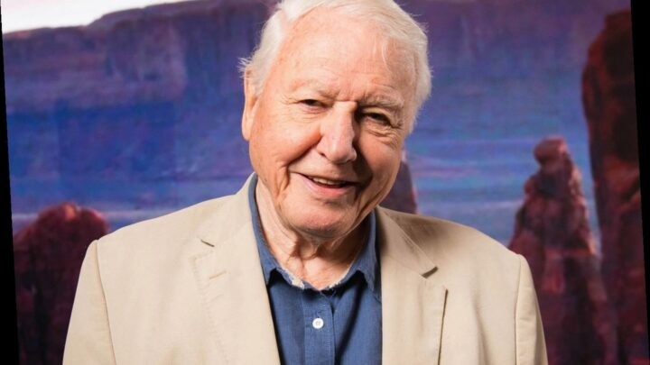 Sir David Attenborough to return to screens with second series of BBC hit Dynasties