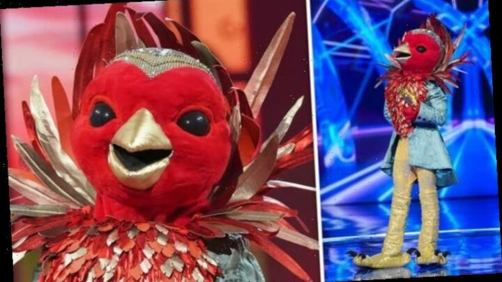 The Masked Singer: Robin's identity 'exposed' with glaring Strictly Come Dancing clue