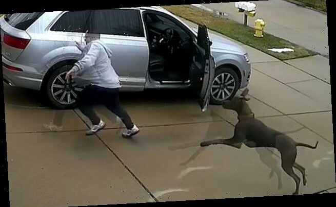Great Dane ambushes terrified homeowner taking out his trash