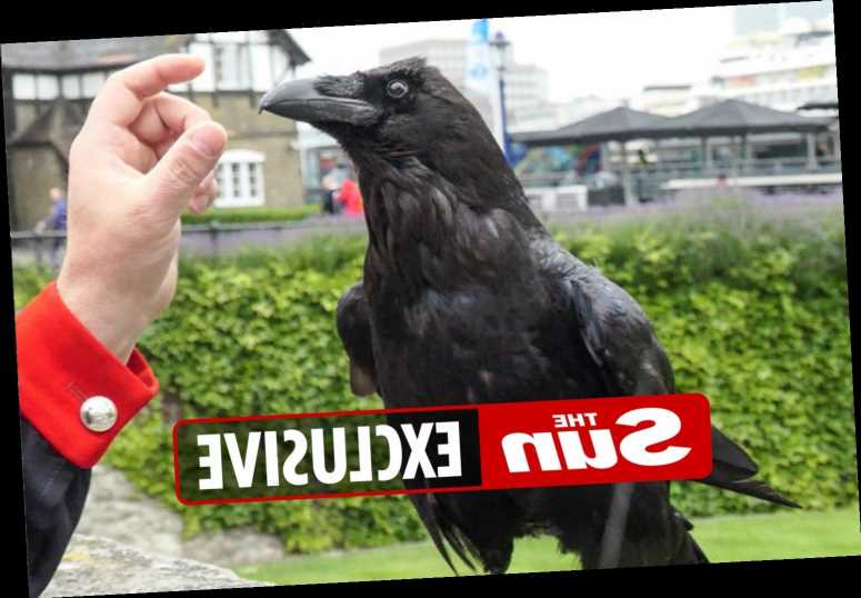 Tower of London's 'Queen' raven 'dead' after vanishing several weeks ago