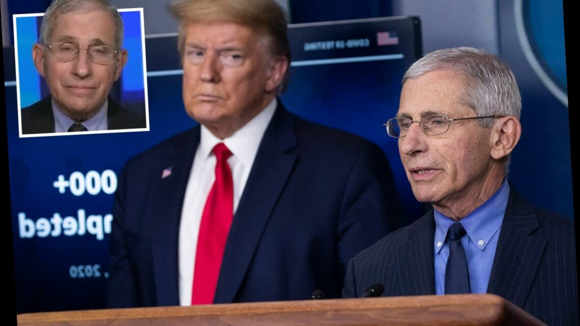 Trump fumes he gets no 'credit for my work' on Covid as 'revered' Fauci sinks Don's 'exaggerated' death toll tweet on TV
