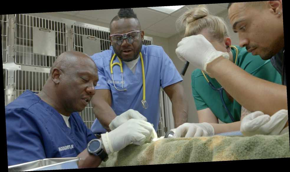 Critter Fixers' Veterinarians on Inspiring Future Black Vets: 'See it, Believe it, Achieve it'