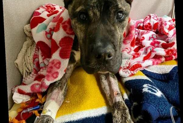 Dying Dog Abandoned in Parking Lot Inspires Push for More Protections for Kentucky's Pets
