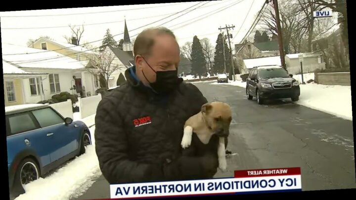 Adorable puppy interrupts DC TV reporter's live shot: 'I'll keep an eye on her'