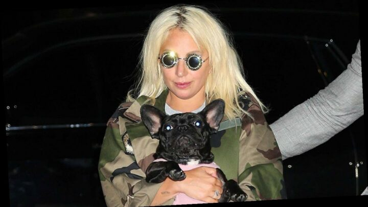 Lady Gaga Offering $500,000 Reward for Stolen Dogs, No Questions Asked