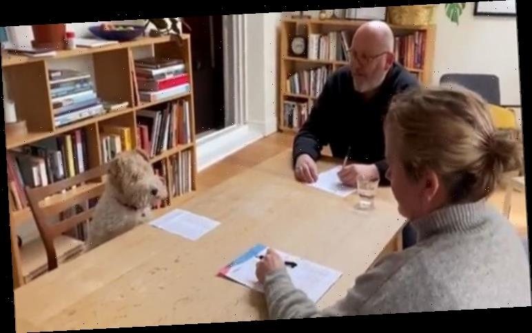 Adorable video goes viral of artist 'interviewing' dog for job opening