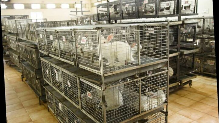 Virginia Bans New Cosmetics Animal Testing and the Sale of Animal-Tested Cosmetics
