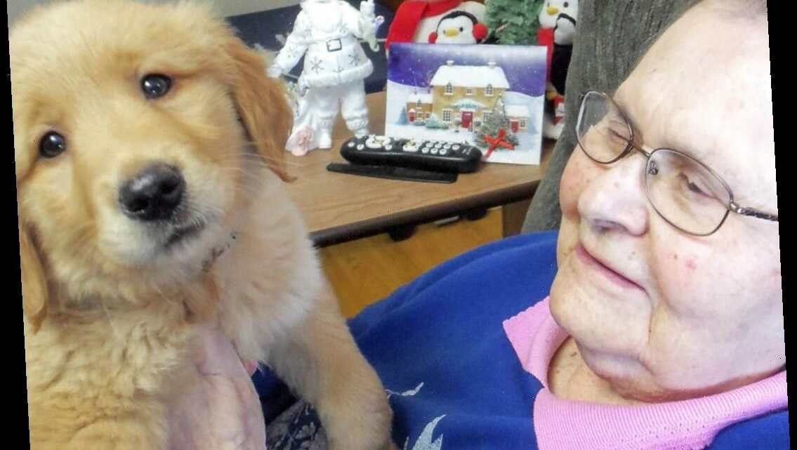 Golden Retriever Puppy Joins Nursing Home's Staff to Spread Cheer: 'We've Seen a Lot of Smiles'