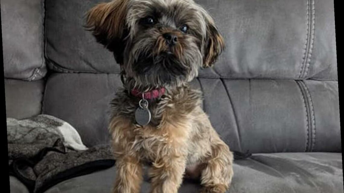 Firefighters Save a Little Dog Named Bean After She Got Trapped in a Reclining Couch