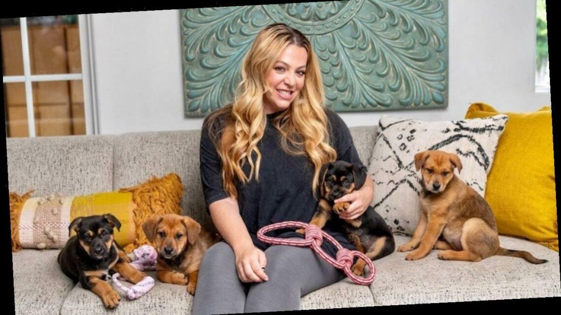 Ellen DeGeneres Loves Wagmor Pets, Owner Melissa Bacelar Says Why