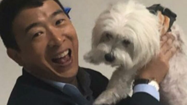 Andrew Yang Defends Giving Up His Dog After Backlash to National Pet Day Post: 'That Still Hurts'