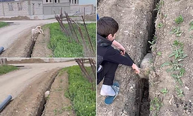 Boy rescues lamb trapped in a drainage ditch