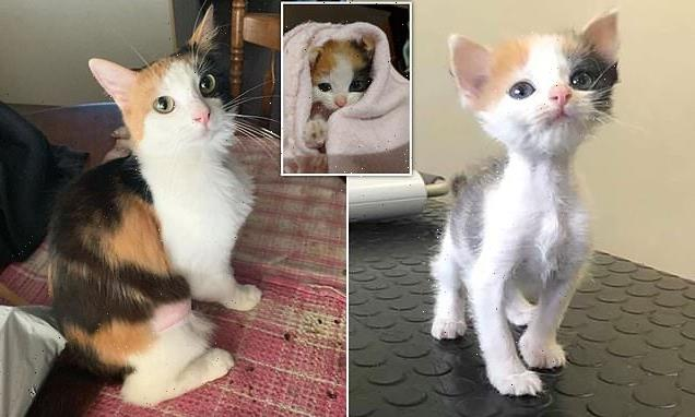 Malnourished kitten called Lulu grew into a healthy cat
