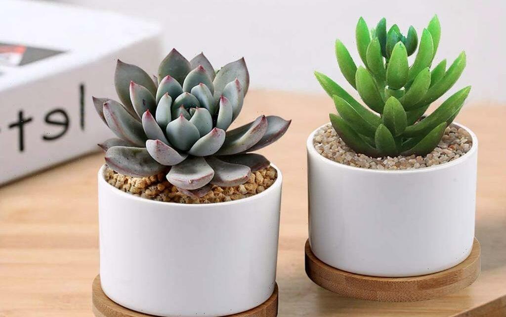 Showcase Your Plants in These Gorgeous Succulent Pots