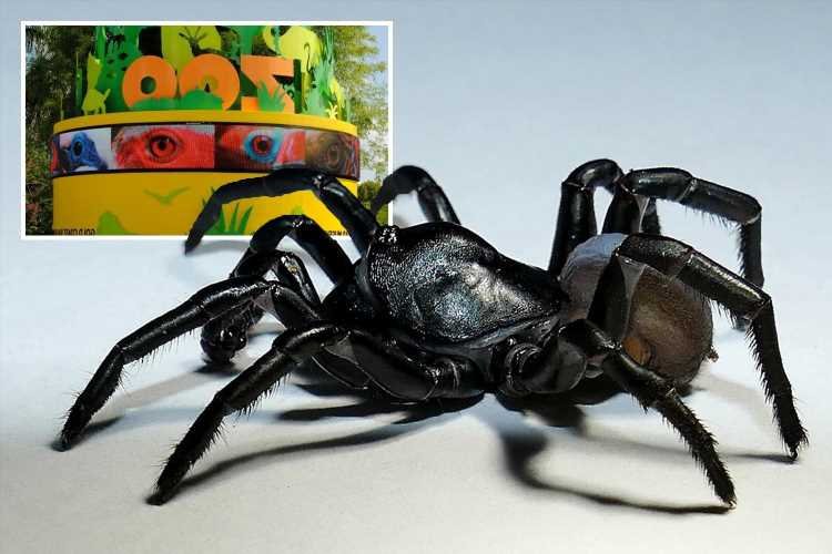 Terrifying new venomous tarantula that can live for TWENTY YEARS discovered in US zoo