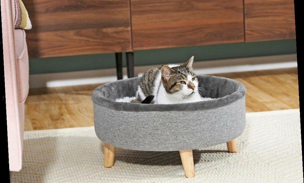 Cute Pet Essentials Are Up to 30% Off During Chewy's Spring Sale
