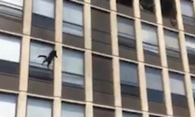 Chicago cat makes leap from fifth floor of burning building