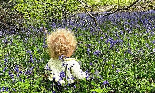 PM's son Wilfred is pictured in bluebells in photo posted by Carrie