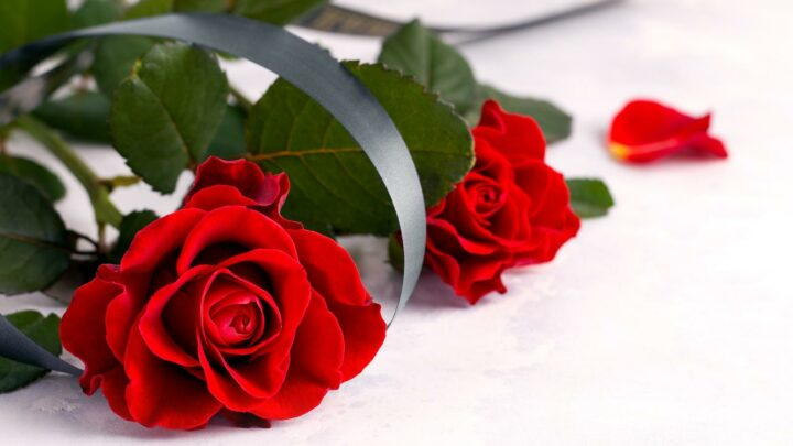 The Most Dramatic Rose Ceremonies In Bachelor History