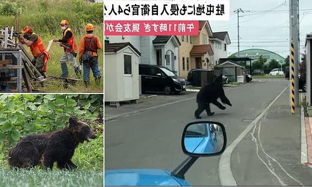 Bear is shot dead after injuring four people during rampage in Japan