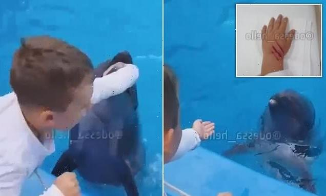 Shocking moment dolphin sinks its teeth into six-year-old boy's hand