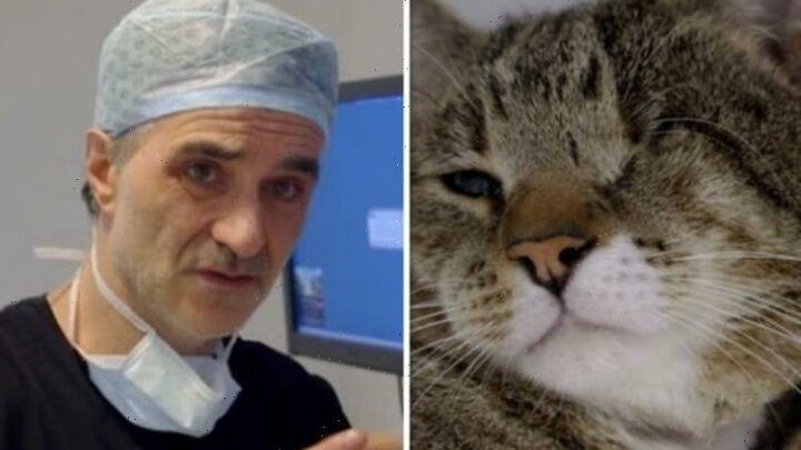 Supervet Noel Fitzpatrick admits 'failure hits hard' as he fights to save one-eyed cat