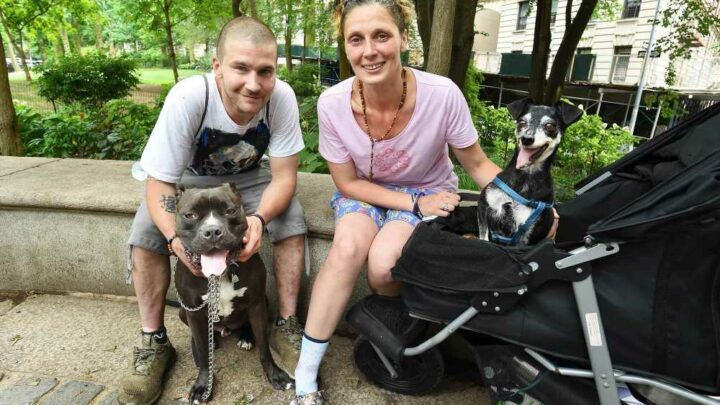 Homeless pet owners stuck on streets as animal-friendly shelter bill stagnates