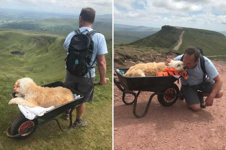 Touching pics show dog owner pushing dying pooch up pet's favourite mountain in wheelbarrow for 'one final adventure'