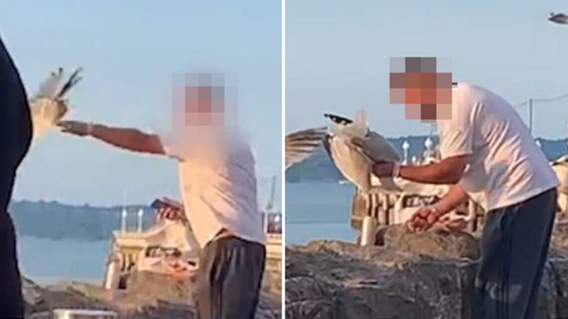 Tourists horrified as man seen THROTTLING seagull before throwing it into the sea after it tried to steal his doughnut