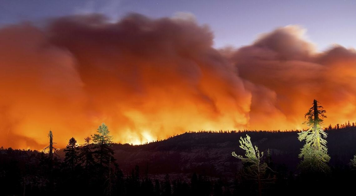"""All California national forests to temporarily close due to """"wildfire crisis"""""""