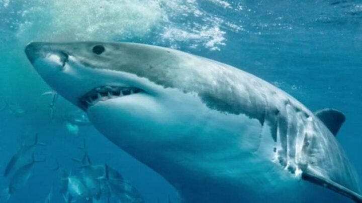 Girl injured in suspected shark attack in Maryland