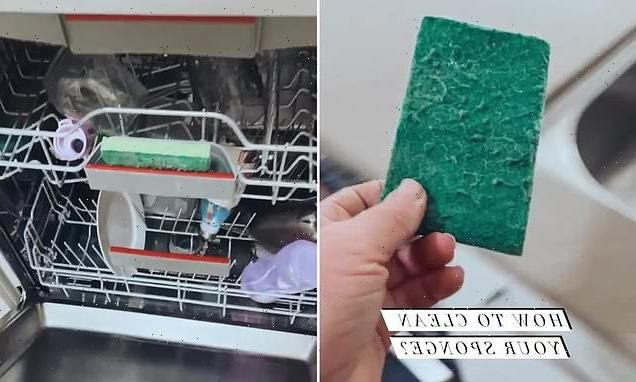 Why you should be putting your SPONGE in the dishwasher