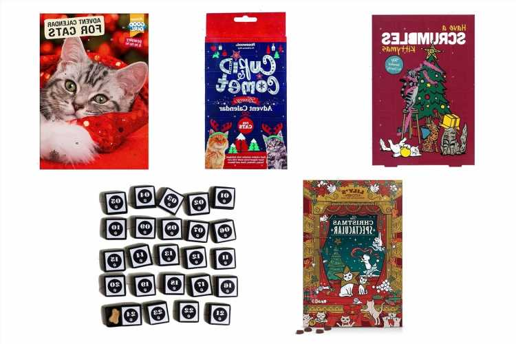 5 Best advent calendars for cats in 2021