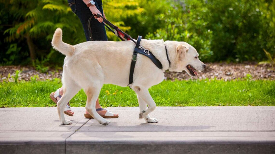 Dog owners could be hit with unlimited fine or even JAIL for using a harness instead of collar while walking their pets