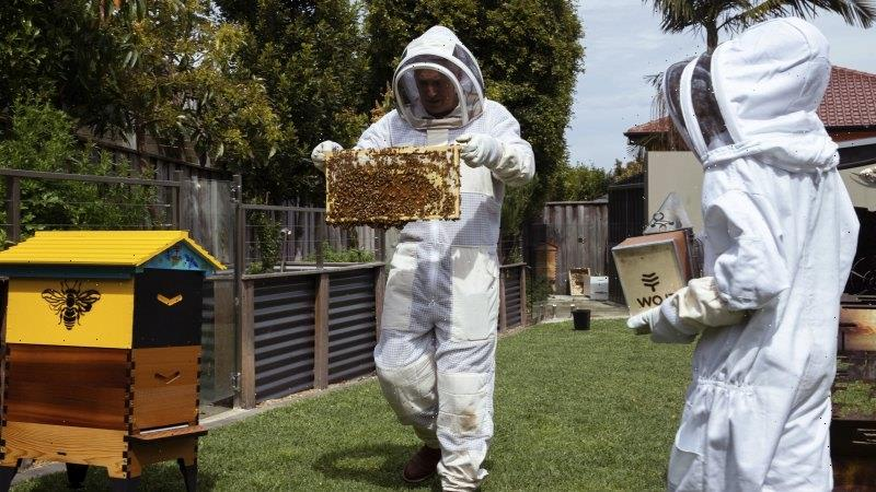 Beekeeping causes buzz of activity during Sydney lockdown
