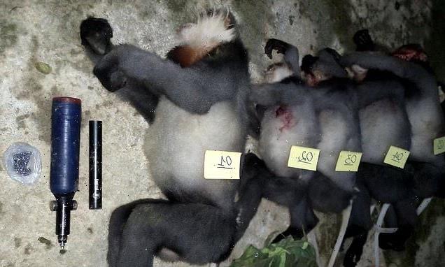 Five critically endangered monkeys shot dead in Vietnam by poachers