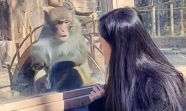 Monkey jumps out of its skin after being surprised by zoo visitor